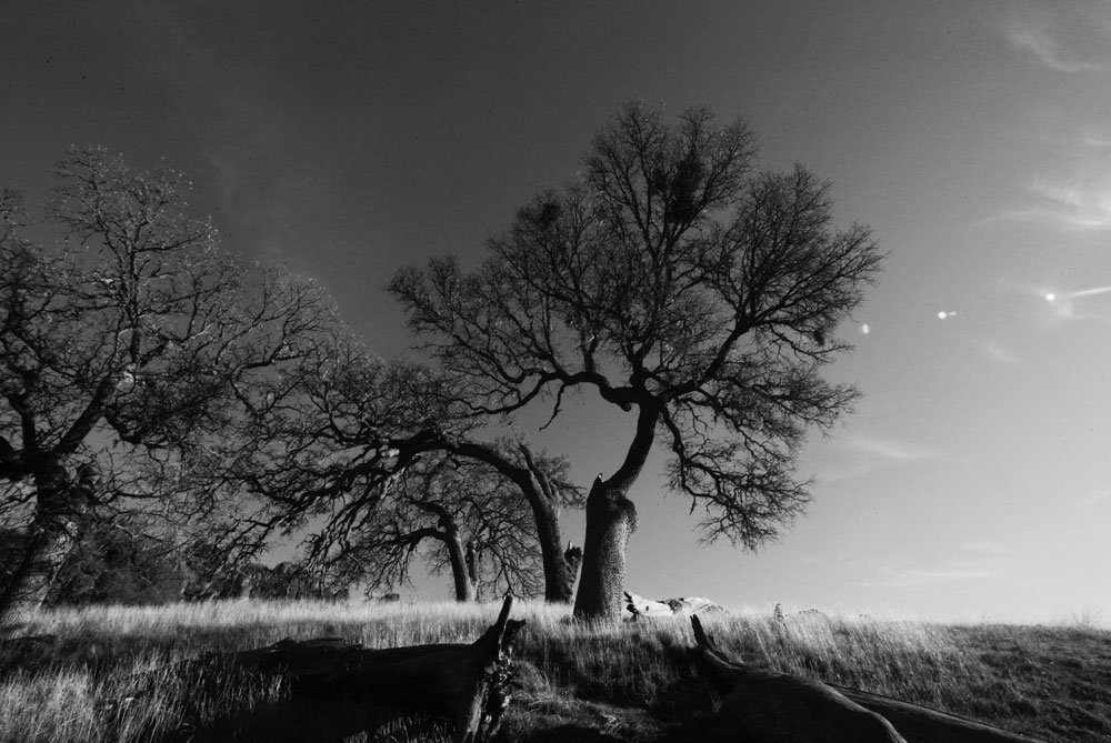 pinnacles-sunlit-story