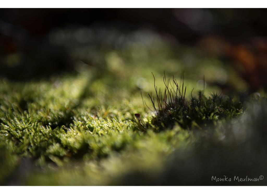 moss-and-lichen