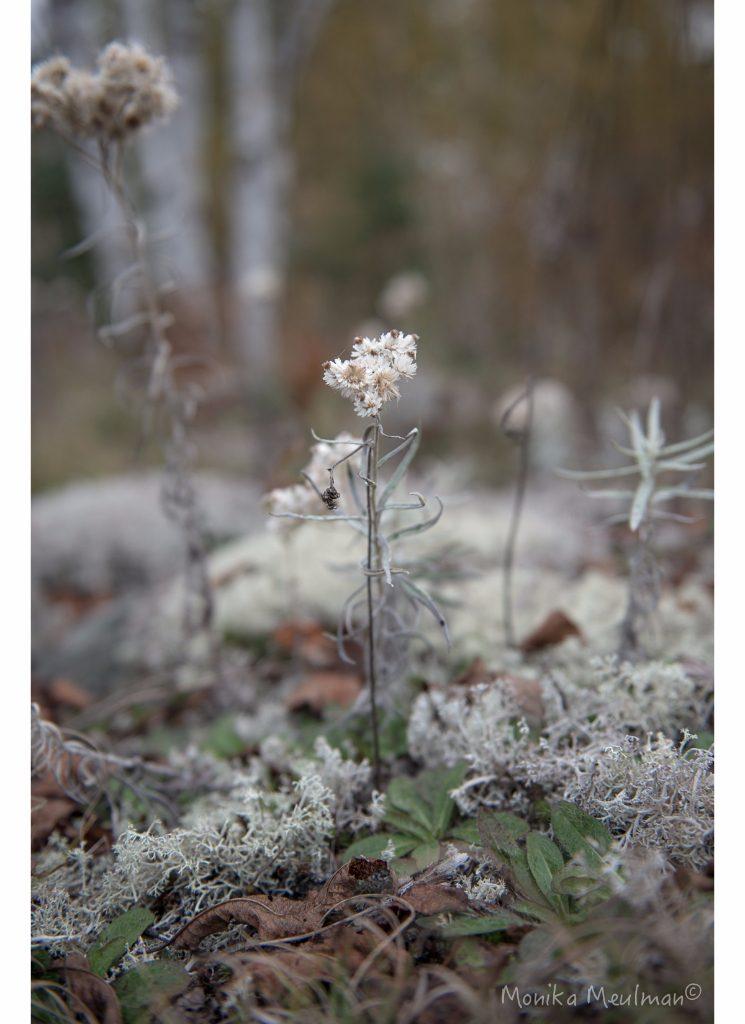 white moss flower